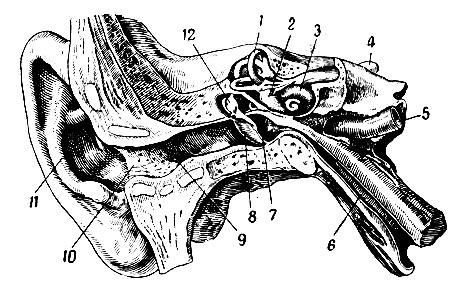 Внутренняя сонная артерия схема фото 103